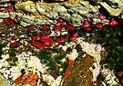 'Blooming Sealife' by debsphotos