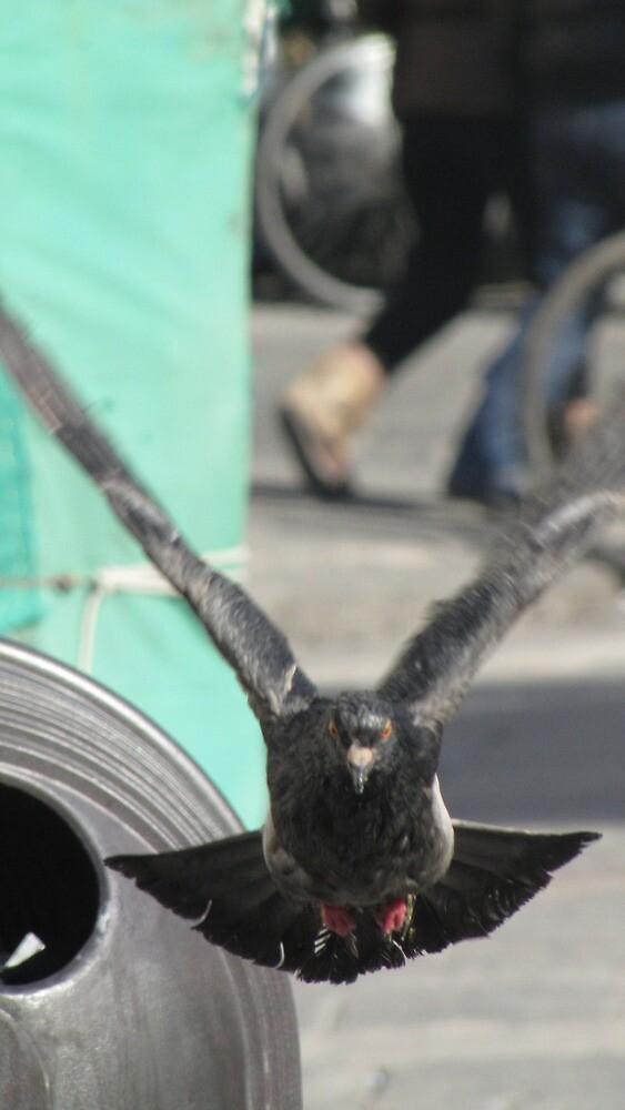 Pigeon! by sasparilla