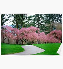 Cheery Blossom Time in VanDusen Botanical Garden Poster