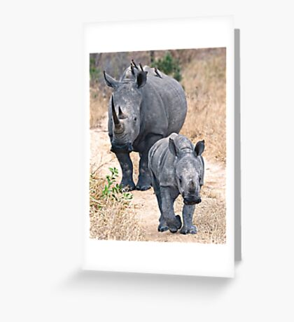 The Rhino Walk Greeting Card