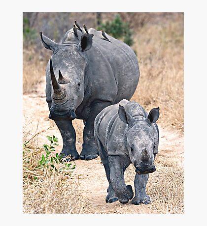 The Rhino Walk Photographic Print