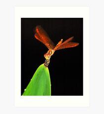 Eastern Amberwing Dragonfly Art Print
