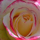 A single bloom by Shubd