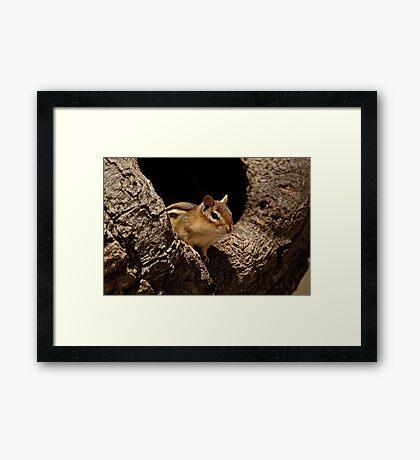 Chipmunk in tree hole - Ottawa, Ontario Framed Print