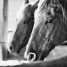 Horse Portrait 3 by andreaanderegg