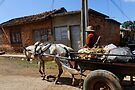 Horse & Cart, Cienfuegos, Cuba by David Carton