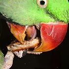 Pets – Sam My Alexandrine Enjoying His Toast (2) by Phil Le Cren
