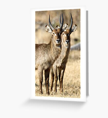 Horned Symmetry Greeting Card