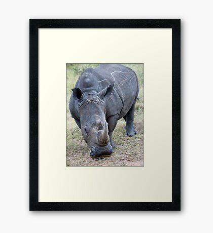 Very Curious - Very Close ! Framed Print