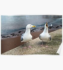 Two Gulls One Squawker Poster