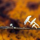 Tiny opportunists by Manon Boily