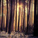 «Luz del bosque» de baxiaart