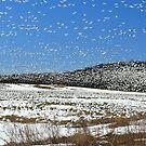 The Swarm by Lori Deiter