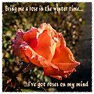 A rose in winter by KateMcCSeattle