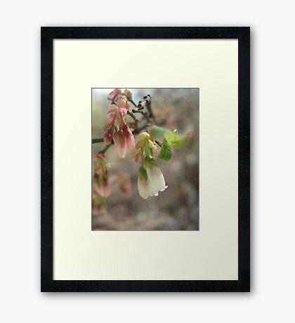 Victorian Blueberries Framed Print