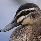 This little Duck .. by Gary  Davey (Jordy)