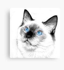 Blue eyes to drown in Canvas Print