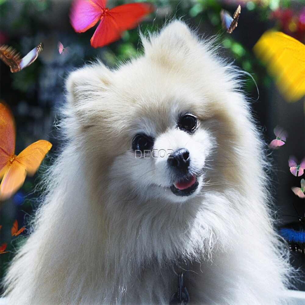 SPITZ LITTLE WHITE DOG AND BUTTERFLY CHARMING DOG GREETINGS NOTE CARD