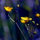Yellow Nights by Marco Heisler