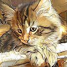 Cute Siberian Kitten by EOSXTi