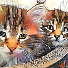 Lovable Siberian kittens by EOSXTi
