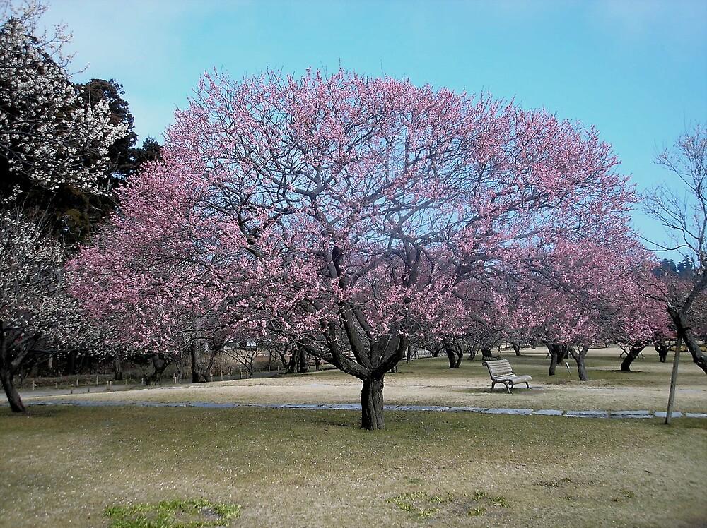 Quot Plum Blossom Tree Quot By Kellythomas Redbubble