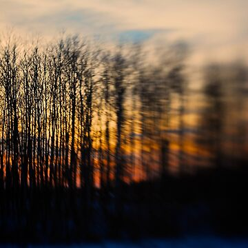 Sunset Trees by trentpurdy