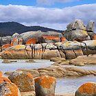 Nature's Rock Painting - Bay of Fires - Tasmania - Australia by TonyCrehan