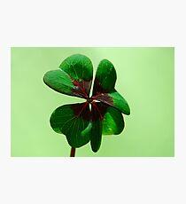 Irish Luck Photographic Print