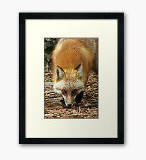 Foxy Man Framed Print