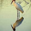Avian Beauty ~ Part Sixteen by artisandelimage