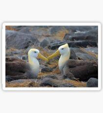 Albatross Love Sticker