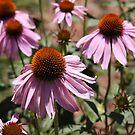 Flowers by jewelsofawe