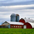 Red Barns Of 3 by Deborah  Benoit