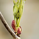 Signs of Spring by Tracy Riddell