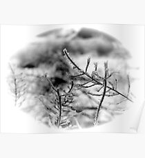 Frosty Tendrils II Poster