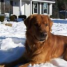 I Love My Dog by Heather Mudge