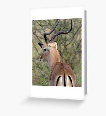 Watchful Impala Buck Greeting Card