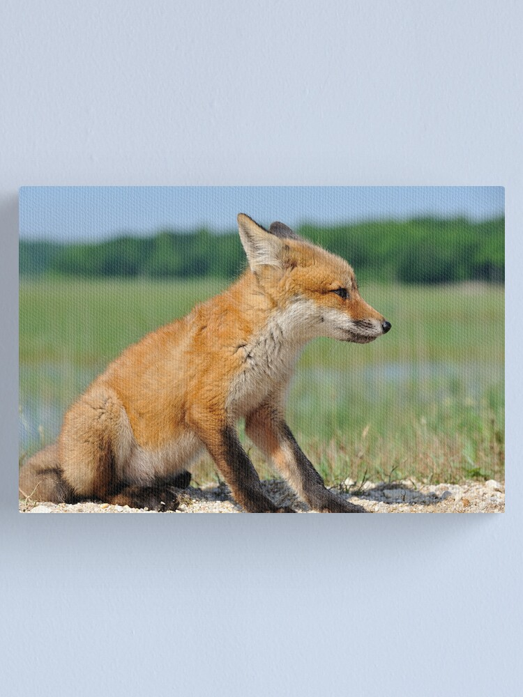 Alternate view of Red Fox Kit Canvas Print