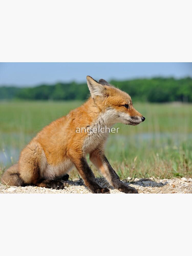 Red Fox Kit by angelcher