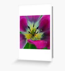 tulipe mauve Carte de vœux