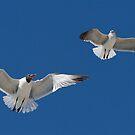Gulls Overhead by Karen  Moore