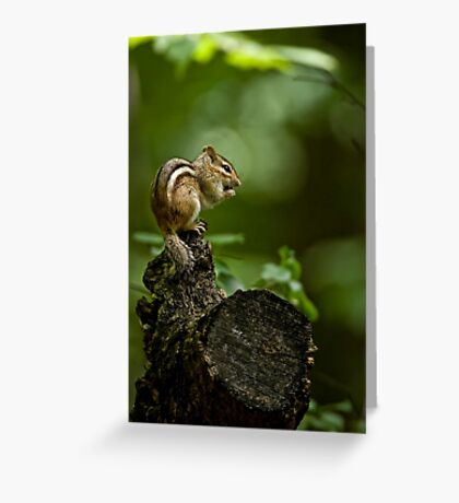Chipmunk in the forest - Jackpine Trail, Ottawa Greeting Card