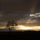 A lone tree silhouetted by the last rays of the sun by Lauren Banks