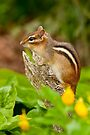 Chipmunk on Log by Michael Cummings