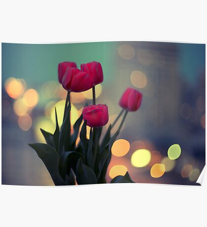 Tulips in twilight Poster