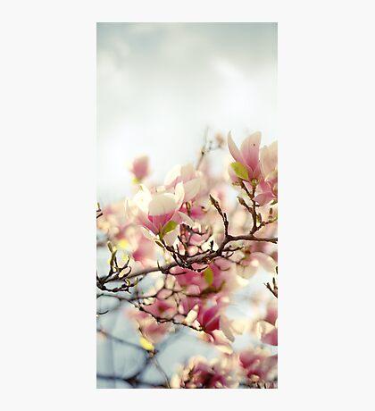 Evening Magnolia Photographic Print