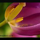 Inside Ze' Tulip by tigerwings