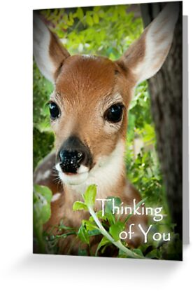 Thinking of You Deer by Wild For Ever