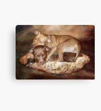 Pitbulls -  The Softer Side Canvas Print